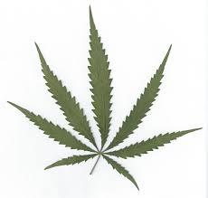 Neue Mitarbeiter werden mit Marihuana geworben